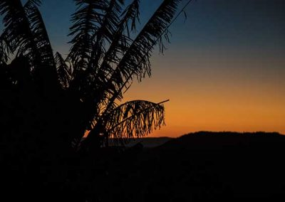 Stuart Bailey Media_Palm Tree at sunset