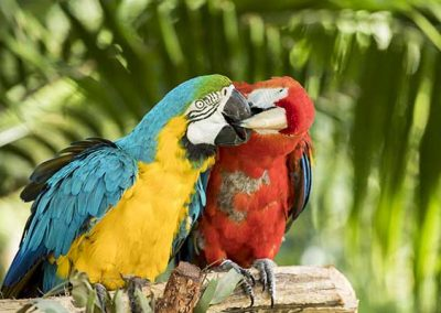 Stuart Bailey Media_Macaws