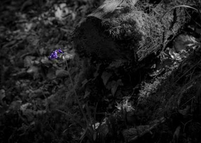 Stuart Bailey Media_Lone Bluebell